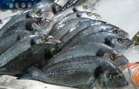להרגיש באירופה עם ארוחת דגים בעמידה – ישר מהמקור!